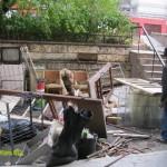 Боклуци мазе - изхвърляне